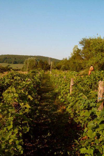 Jenny tussen de druiven